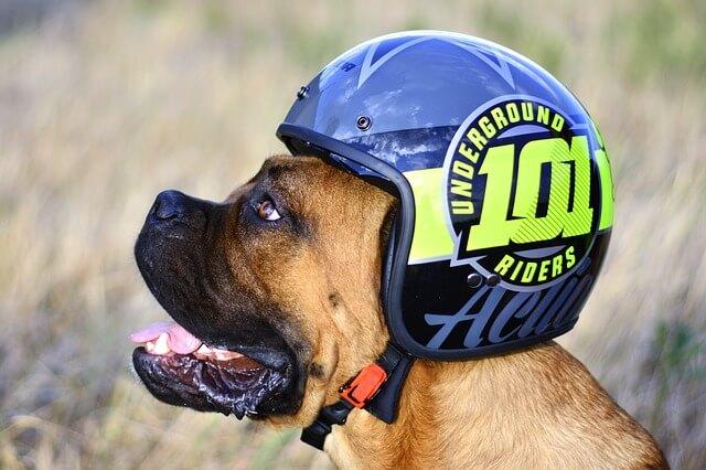 Το σκυλί στο μηχανάκι με κράνος και στολή!