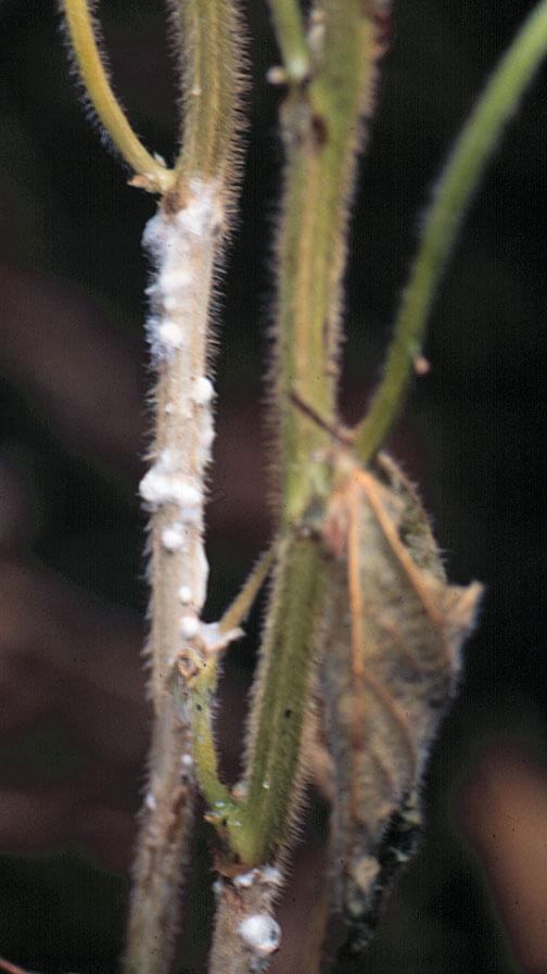 Αντιμετωπίζουμε τη μούχλα στα φυτά