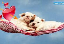 Ζωάκια ερωτευμένα - Μέρος 2ο