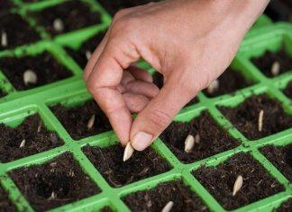 Φτιαξτε ένα έξυπνο, μικρό φυτώριο