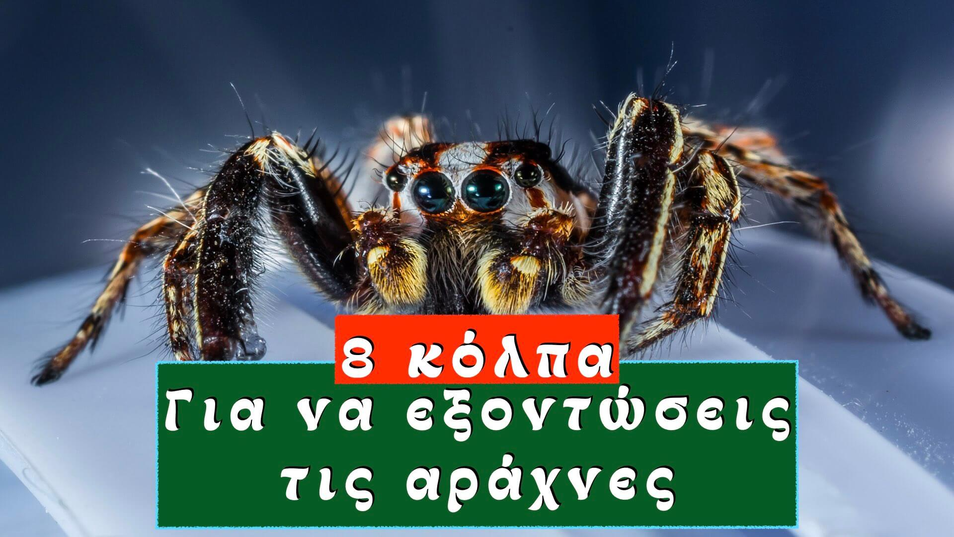 Αράχνες; 8 κόλπα για να τις απωθήσεις και να τις εξοντώσεις