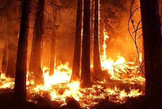 Γιατί οι πυρκαγιές στον Αμαζόνιο,δεν είναι πρόβλημα μόνο της Βραζιλίας