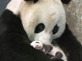 Τα πιο γλυκά babies του ζωικού