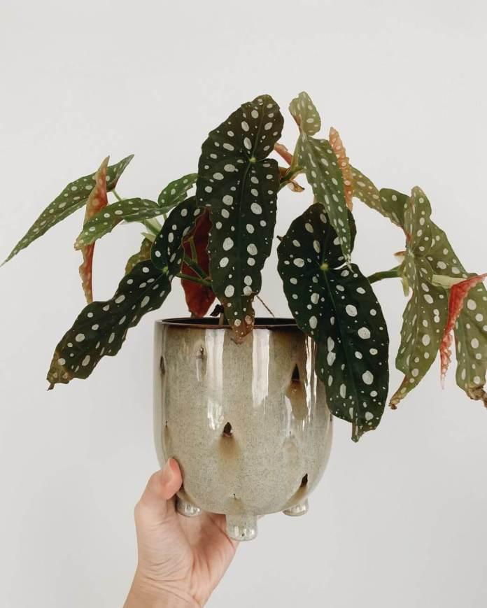 Πως θα δέσετε / στερεώσετε ένα ευαίσθητο φυτό