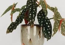 summer pattern leaf plants