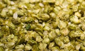 Dried hops