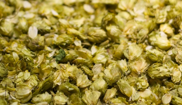 Dried hops
