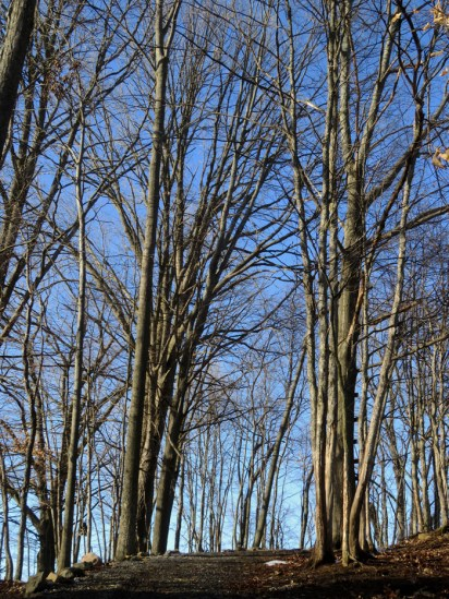 ... even the gazillion birds singing in the woods!
