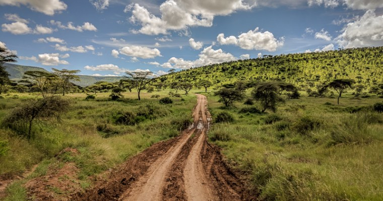 Serengeti Grazing Lessons Part… I lost track.