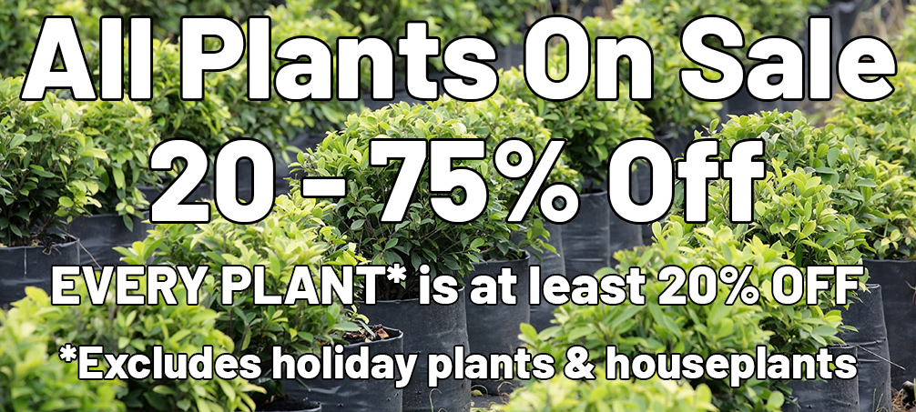 All Plants On Sale 20 - 75% Off EVERY PLANT* is at least 20% OFF *Excludes holiday plants and houseplants