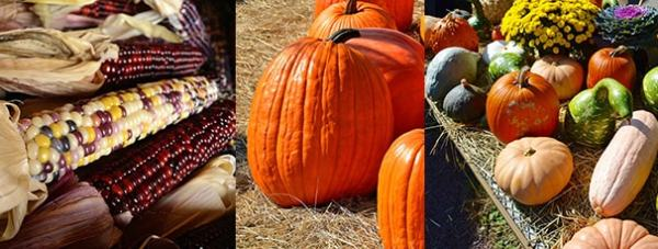 Fall Season Special Pricing