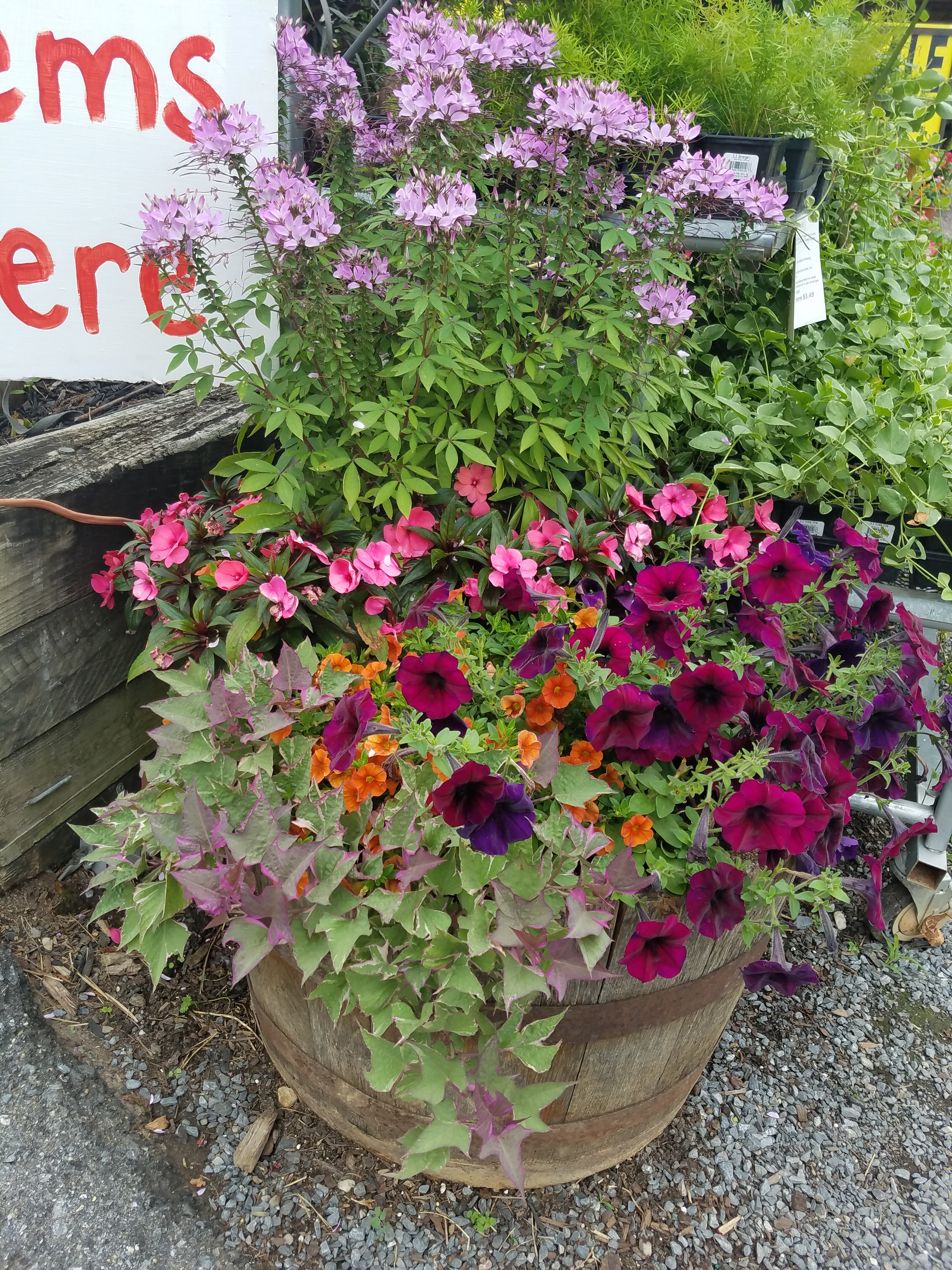 Our Convenient Nursery Offers A Full Selection Of Shade And Flowering  Trees, Native Plants, Japanese Maples, Shrubs, Groundcovers, And Perennial  And Annual ...