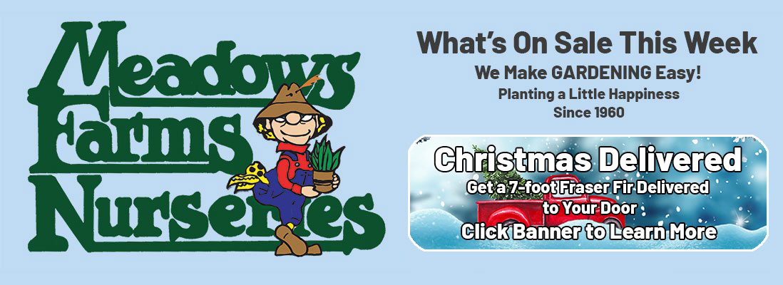 Meadows Farms Nurseries. What's On Sale This Week. We Make GARDENING Easy! Planting a Little Happiness Since 1960. Christmas Delivered! Get a 7-foot Fraser Fir Delivered to Your Door. Click Banner to Learn More
