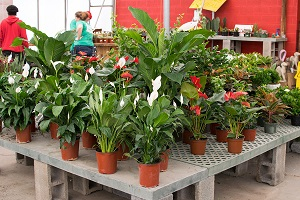 Mix of houseplants for sale