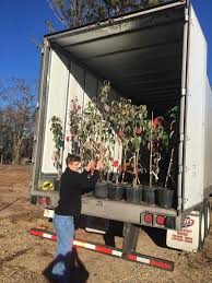 Unloading a truck of trees
