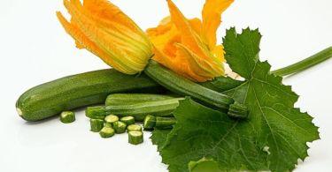 فوائد الكوسة إليك 12 فائدة صحية للكوسة (القرع)
