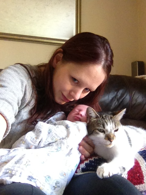 having a baby dogs having a baby when you have cats cat kitten pets how to handle babies and pets advicecats cat kitten pets how to handle babies and pets advice