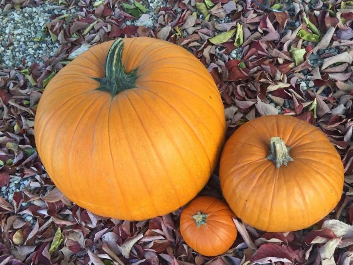 halloween october sandwich ideas kids party spooky food fun pumpkin patch fall autumn orange leaves