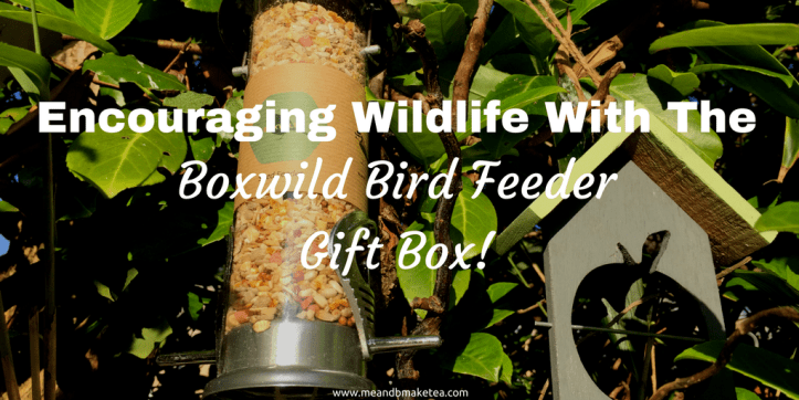 boxwild gifts for wildlife bird nature reviews fathers day gift guides subscription boxes