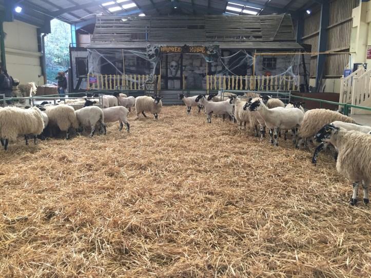 The big sheep devon amusement park barn and haunted house