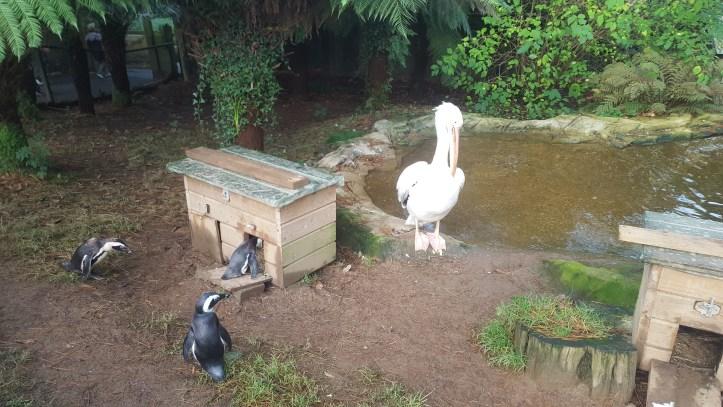 pink stork at coombe martin wildlife dinosaur park