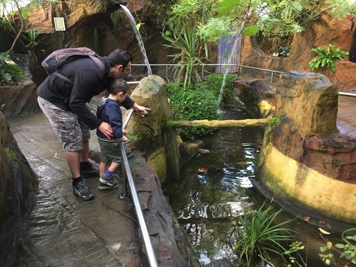 coombe martin wildlife dinosaur park botanical garden and terrapins