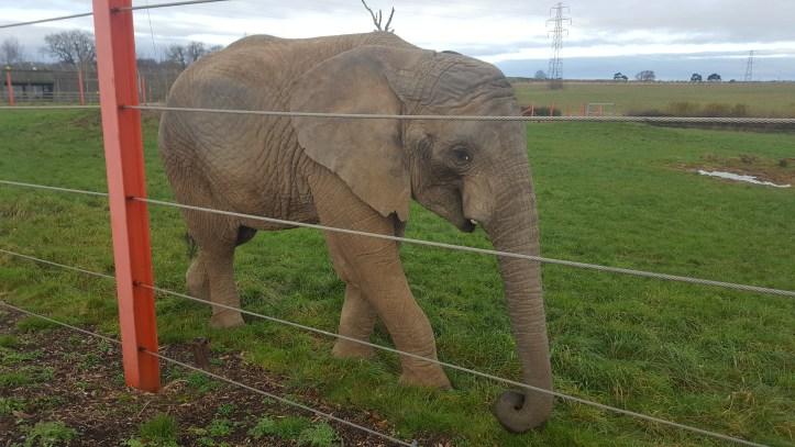 noahs ark soo farm bristol christmas elephant eden