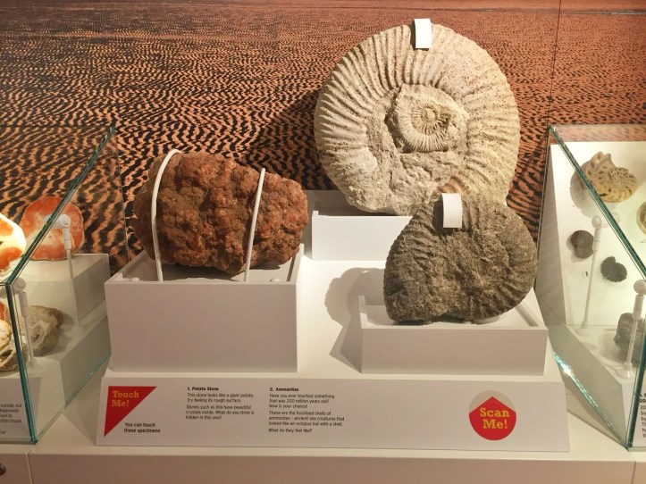 A Review of Weston Museum in Weston-super-Mare fossil