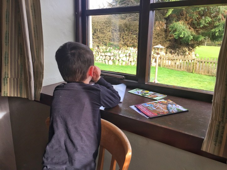 bird watching at west withy farm in exmoor
