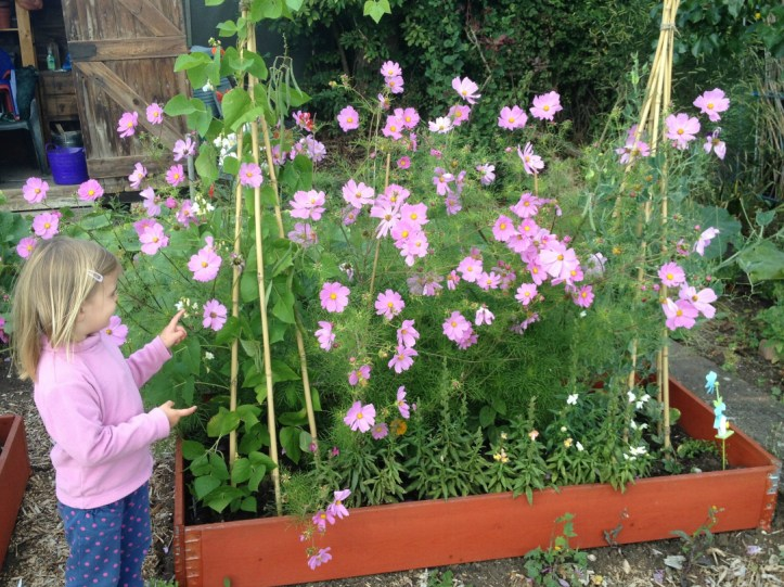 growing seeds in the garden with kids
