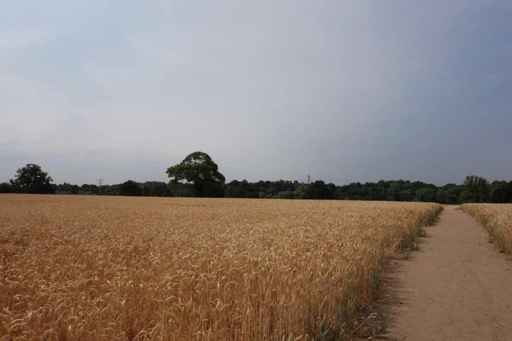 Hidden Gems in Warwickshire - Discovering Old Milverton