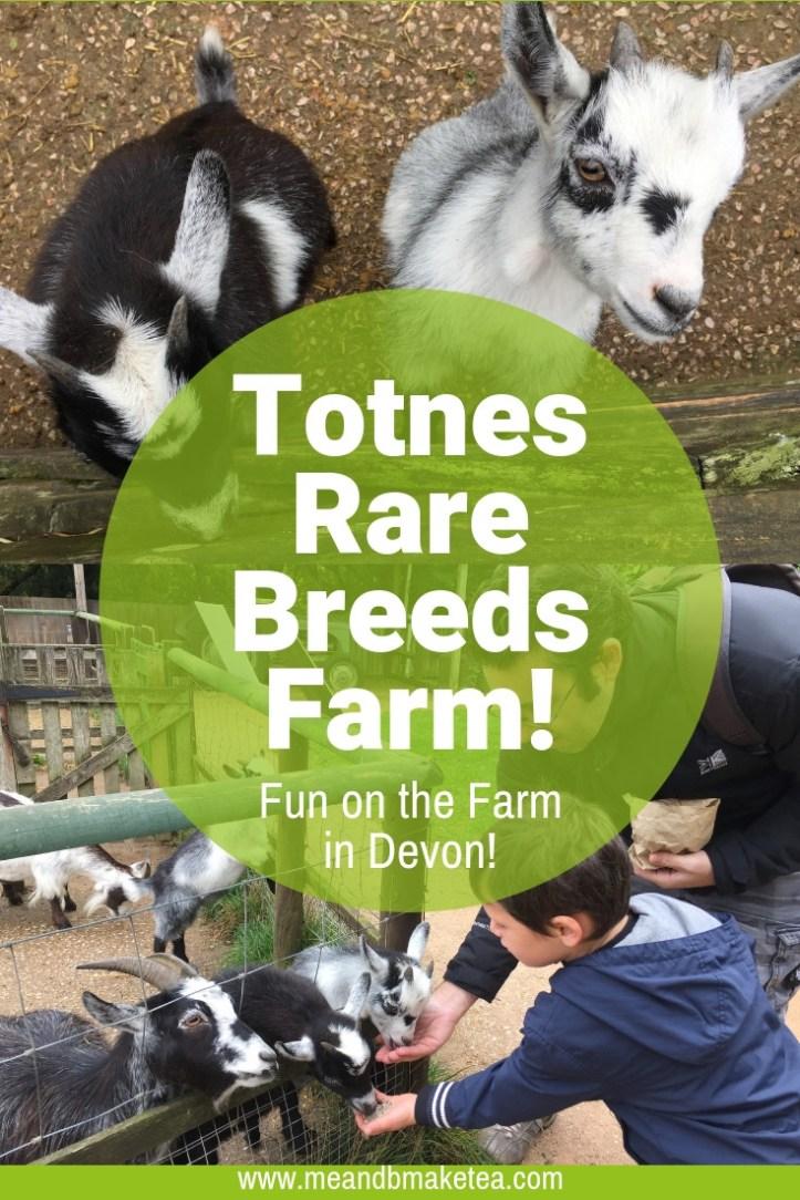 Totnes Rare Breeds Farm Review-devon and dartmoor