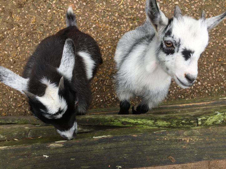 totnes rare breeds farm in devon review