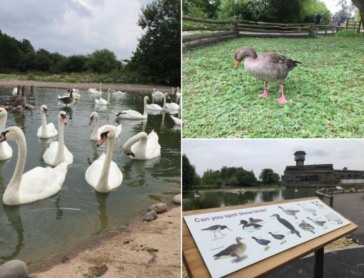 Slimbridge wetland centre review