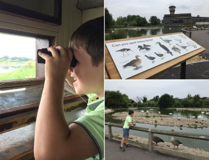 Slimbridge wetland centre review and top tips for a great day
