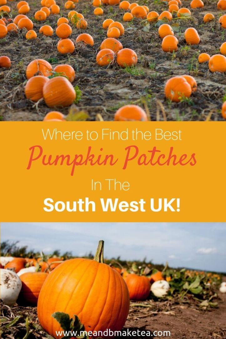 pumpkin-patches-south-west