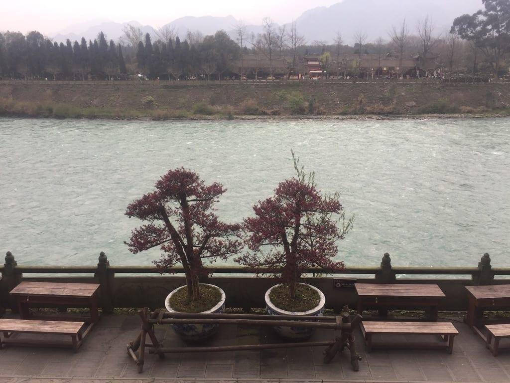Bonsai overlooking Minjian