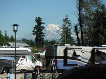 View of Mt.Rainier from our campground/worksite