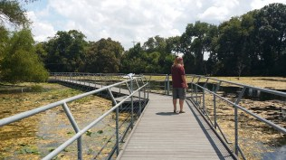 2015-09-04-san-marcos-wetlands-36