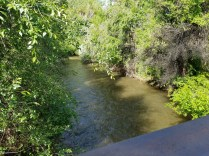 2016-06-01-bear-valley-bike-path-1