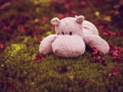 Tiny Hippo with Moss