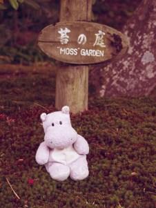 Tiny Hippo Moss Garden