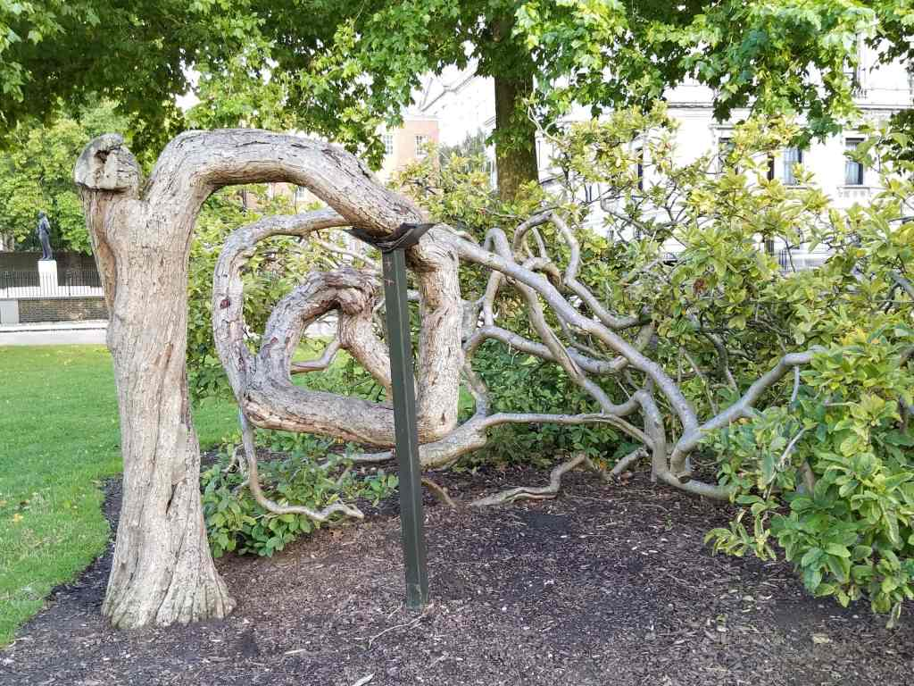 crooked tree in park