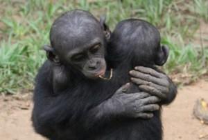 bonobo_hug