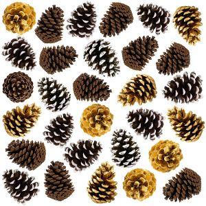 assorted-pine-cones