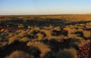 late afternoon slanting light across a spinifex bush plain
