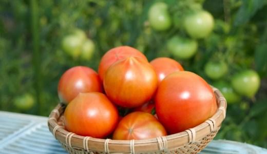 カットトマト缶とホールトマト缶の違いとは?保存方法と保存期間についてもご紹介!