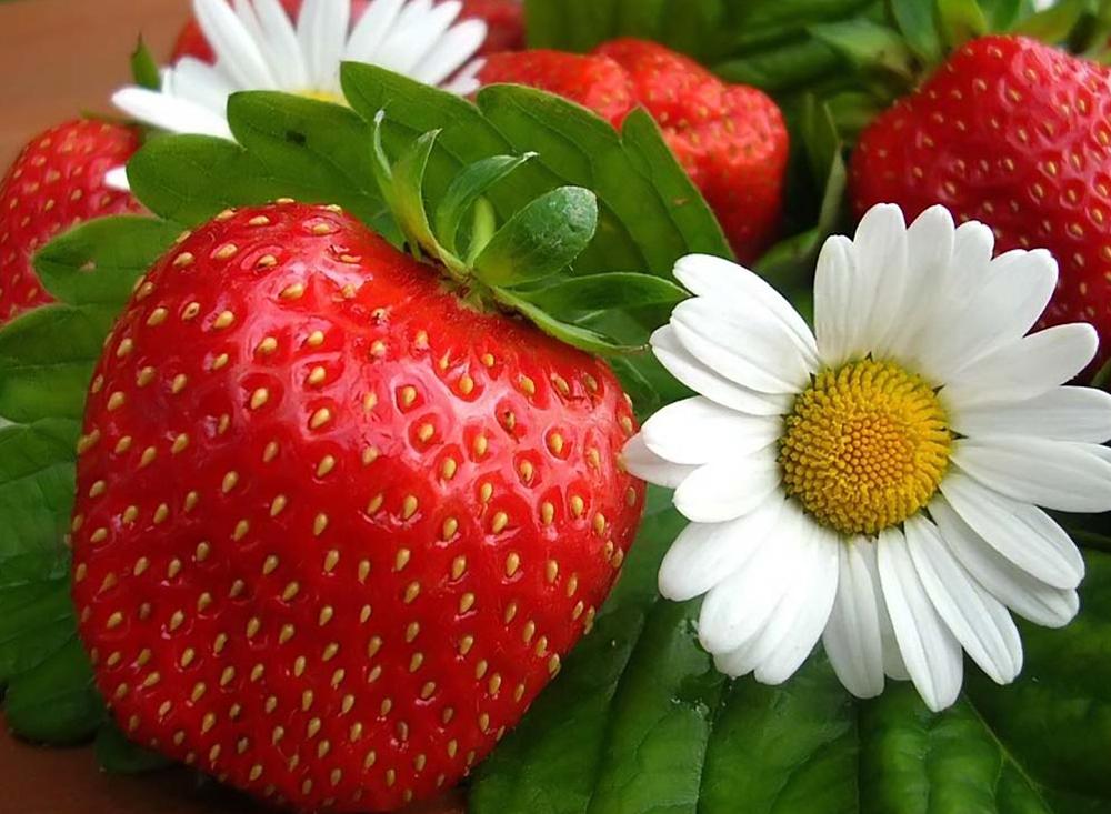 Земляника – вкусное украшение сада
