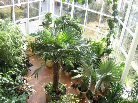 Комнатные растения для зимнего сада
