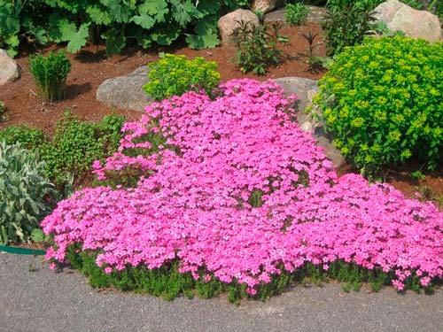 Многие выбирают цветущие растения